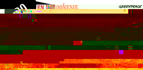 zero derforestation indonesie blog Quat´rues